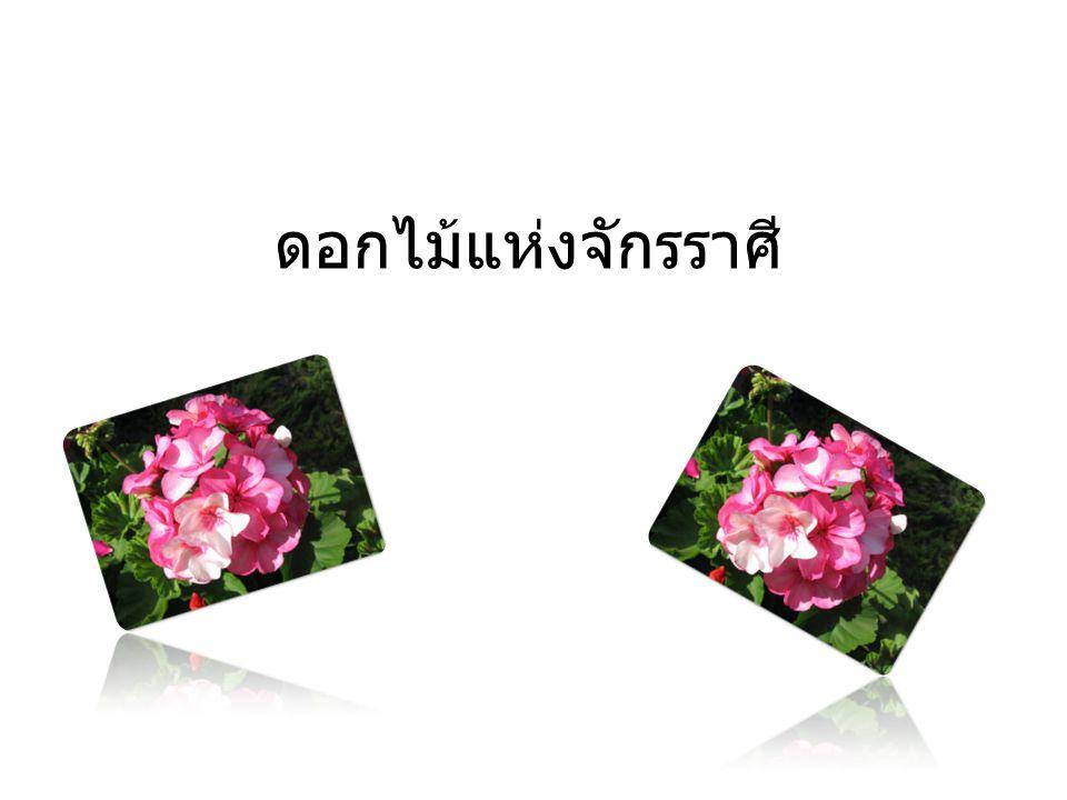 สารบัญ เรื่อง ดอกไม้แห่ง จักรราศี