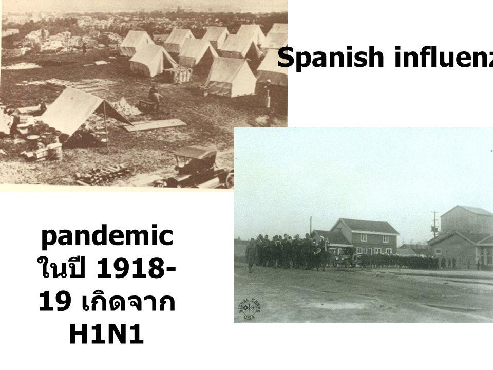 pandemic ในปี 1918- 19 เกิดจาก H1N1 Spanish influenza