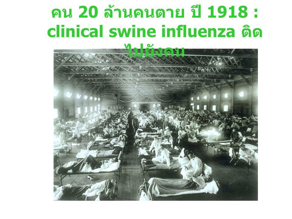 คน 20 ล้านคนตาย ปี 1918 : clinical swine influenza ติด ไปยังคน