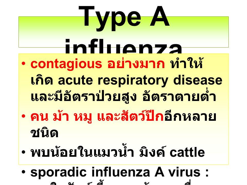 Type A influenza contagious อย่างมาก ทำให้ เกิด acute respiratory disease และมีอัตราป่วยสูง อัตราตายต่ำ คน ม้า หมู และสัตว์ปีกอีกหลาย ชนิด พบน้อยในแมว