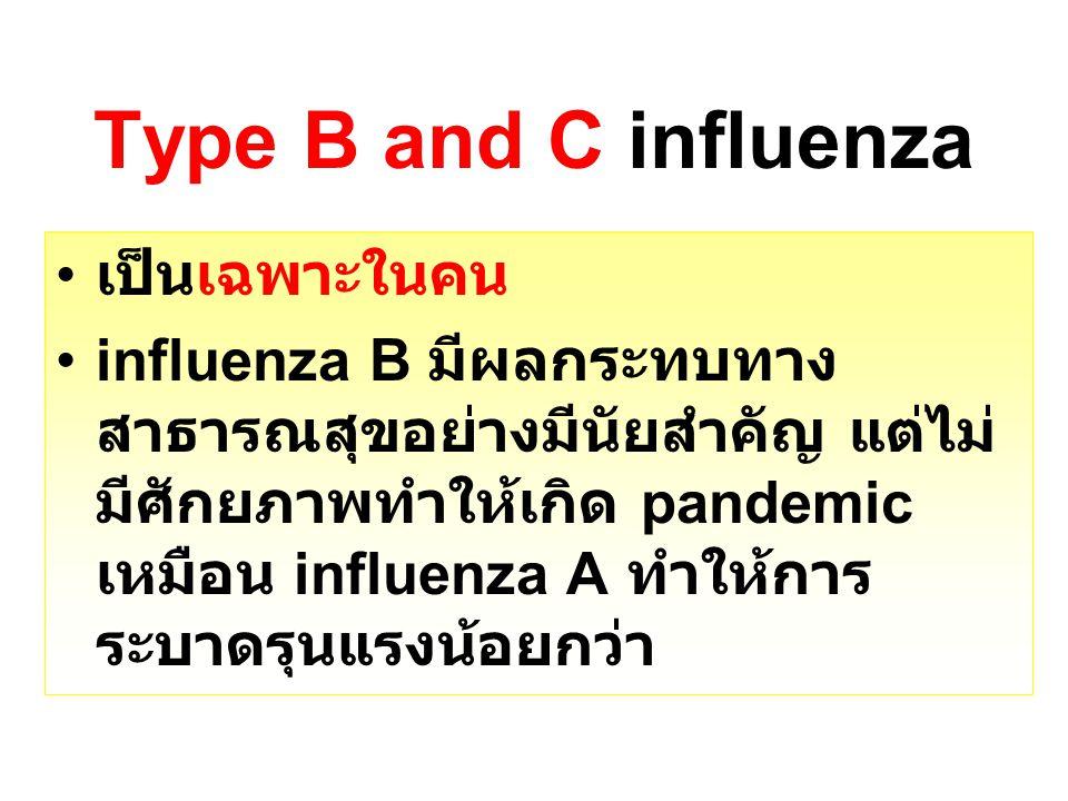 เป็นเฉพาะในคน influenza B มีผลกระทบทาง สาธารณสุขอย่างมีนัยสำคัญ แต่ไม่ มีศักยภาพทำให้เกิด pandemic เหมือน influenza A ทำให้การ ระบาดรุนแรงน้อยกว่า Typ