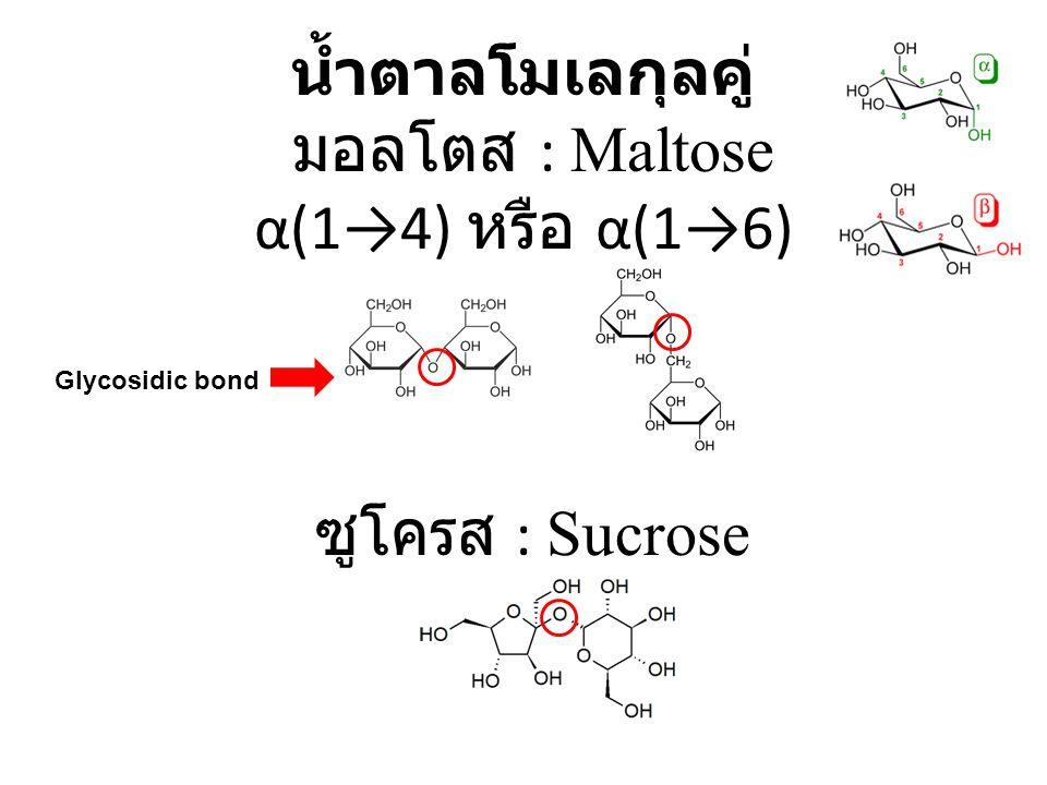 น้ำตาลโมเลกุลคู่ มอลโตส : Maltose α(1→4) หรือ α(1→6) ซูโครส : Sucrose Glycosidic bond