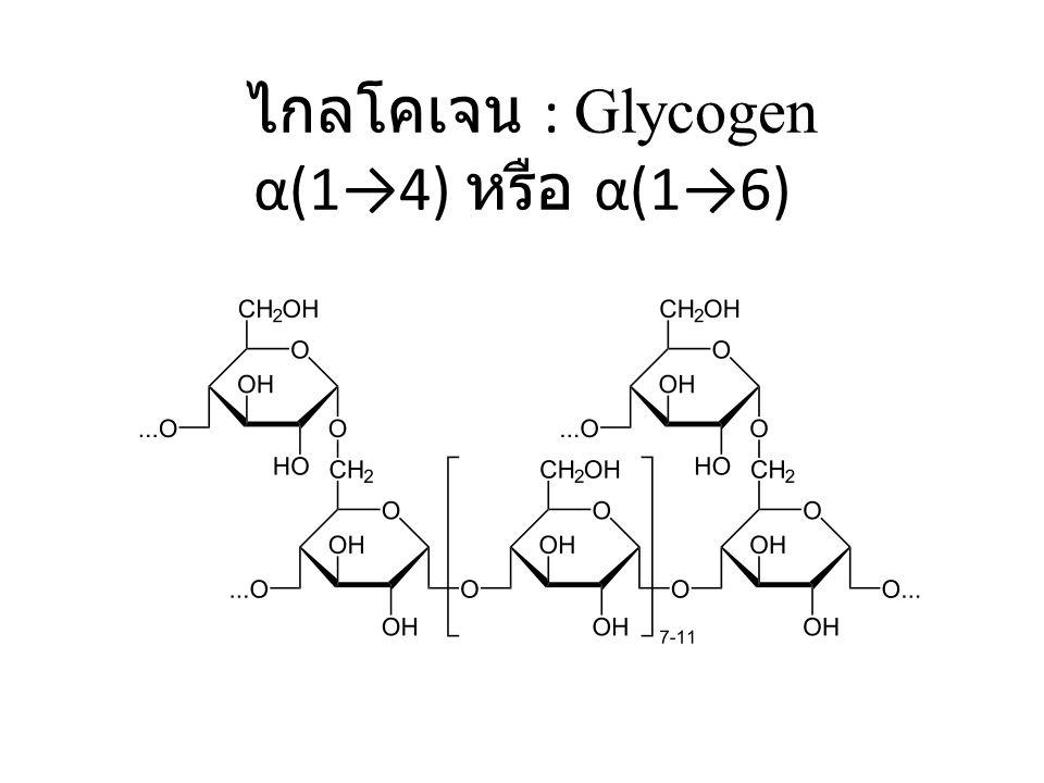 ไกลโคเจน : Glycogen α(1→4) หรือ α(1→6)