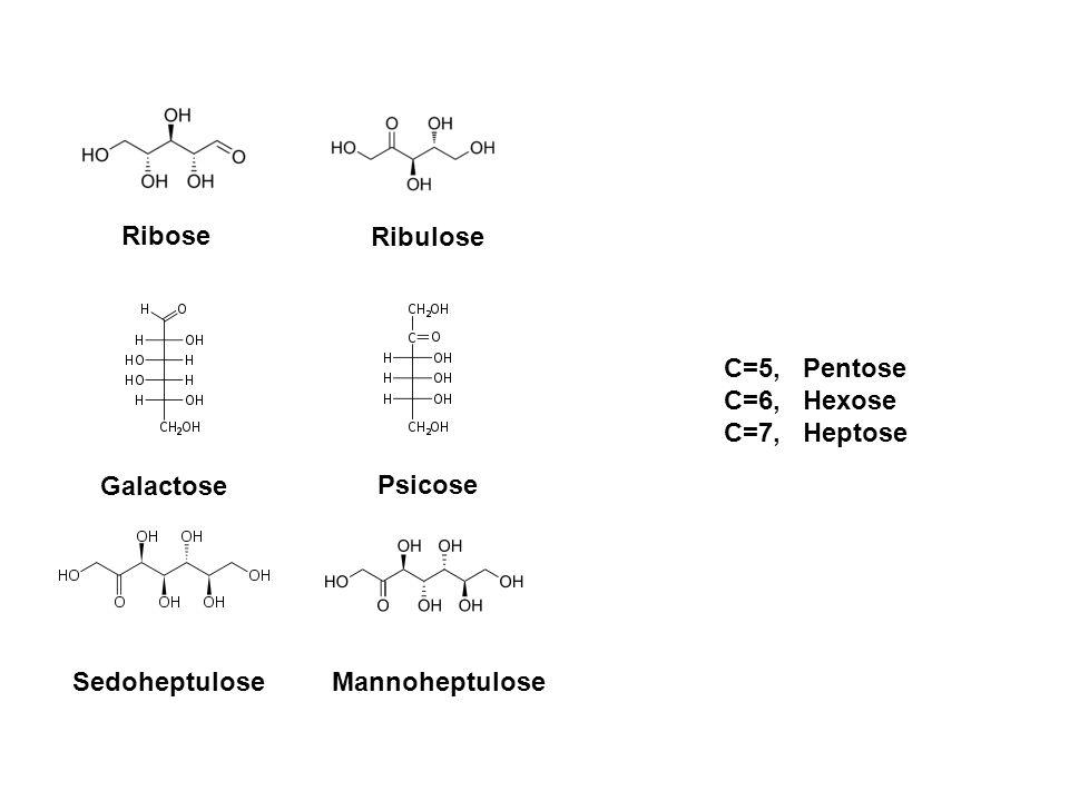 Ribose Ribulose Galactose Psicose SedoheptuloseMannoheptulose C=5, Pentose C=6, Hexose C=7, Heptose