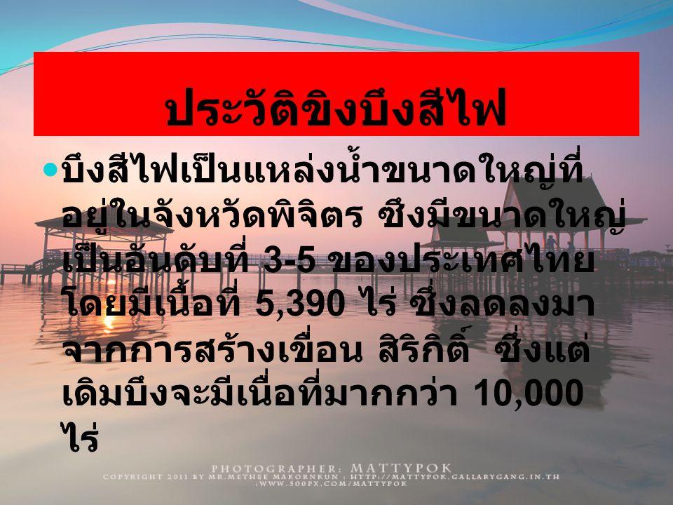 ประวัติขิงบึงสีไฟ บึงสีไฟเป็นแหล่งน้ำขนาดใหญ่ที่ อยู่ในจังหวัดพิจิตร ซึงมีขนาดใหญ่ เป็นอันดับที่ 3-5 ของประเทศไทย โดยมีเนื้อที่ 5,390 ไร่ ซึ่งลดลงมา จากการสร้างเขื่อน สิริกิติ์ ซึ่งแต่ เดิมบึงจะมีเนื่อที่มากกว่า 10,000 ไร่