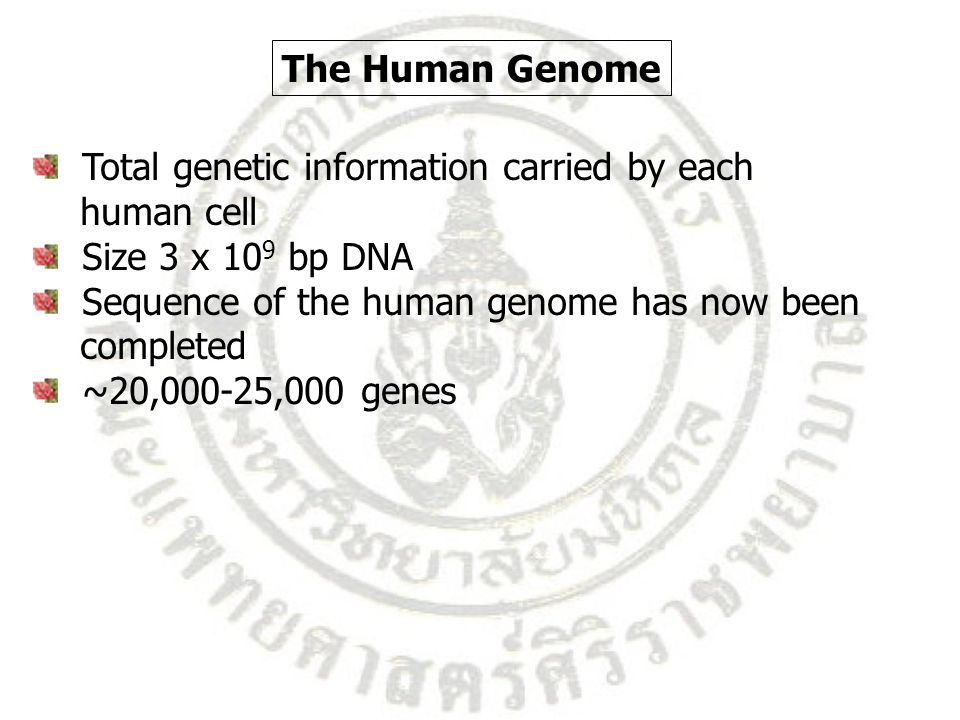 Total genetic information carried by each human cell Size 3 x 10 9 bp DNA Sequence of the human genome has now been completed ~20,000-25,000 genes The