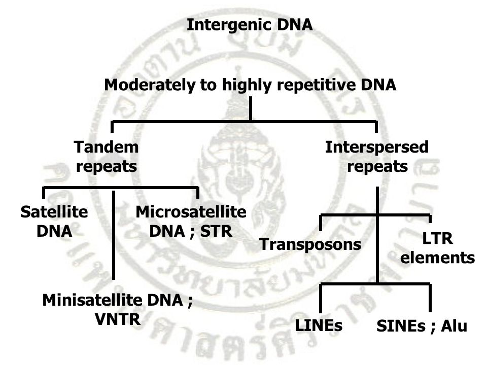 Intergenic DNA Interspersed repeats Tandem repeats Moderately to highly repetitive DNA Satellite DNA Minisatellite DNA ; VNTR Microsatellite DNA ; STR
