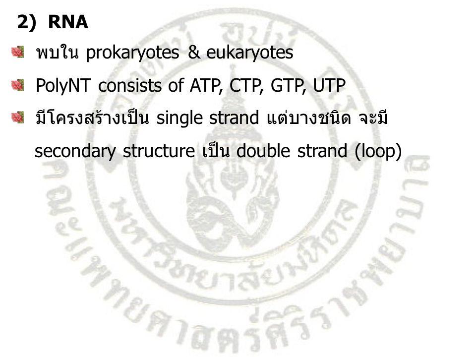 RNA strand Secondary structure แบ่งเป็น messenger RNA (mRNA), ribosomal RNA (rRNA), transfer RNA (tRNA), Small nuclear RNA