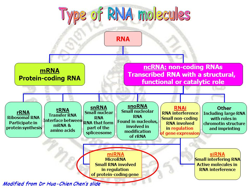 RNA mRNA Protein-coding RNA ncRNA: non-coding RNAs Transcribed RNA with a structural, functional or catalytic role rRNA Ribosomal RNA Participate in protein synthesis tRNA Transfer RNA Interface between mRNA & amino acids snRNA Small nuclear RNA RNA that form part of the spliceosome snoRNA Small nucleolar RNA Found in nucleolus, involved in modification of rRNA RNAi RNA interference Small non-coding RNA involved in regulation of gene expression Other Including large RNA with roles in chromotin structure and imprinting siRNA Small interfering RNA Active molecules in RNA interference miRNA MicroRNA Small RNA involved in regulation of protein-coding gene Modified from Dr Hua-Chien Chen's slide
