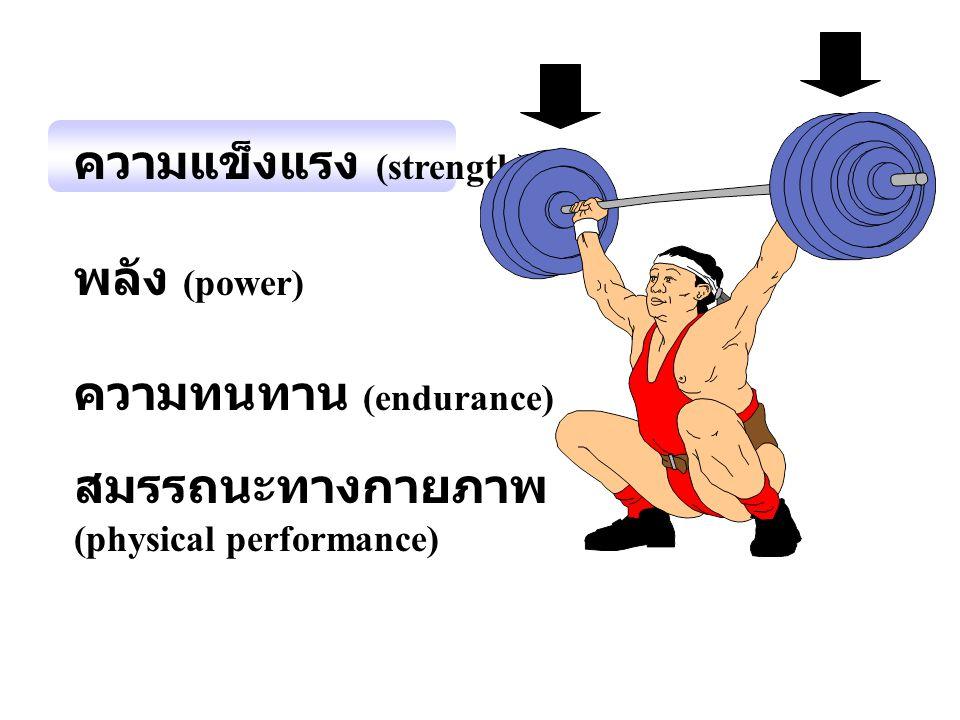 ความแข็งแรง (strength) พลัง (power) ความทนทาน (endurance) สมรรถนะทางกายภาพ (physical performance)