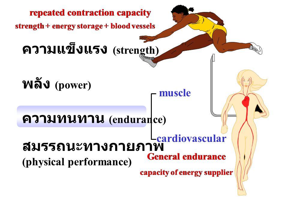 ความแข็งแรง (strength) พลัง (power) ความทนทาน (endurance) สมรรถนะทางกายภาพ (physical performance) cardiovascular muscle strength + energy storage + bl