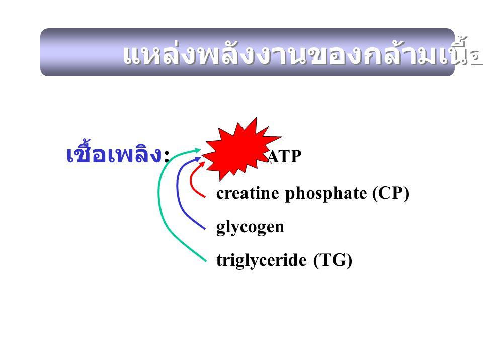 เชื้อเพลิง : ATP creatine phosphate (CP) glycogen triglyceride (TG) เชื้อเพลิง : ATP creatine phosphate (CP) glycogen triglyceride (TG) แหล่งพลังงานขอ