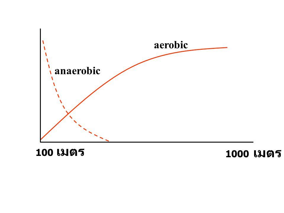 anaerobic aerobic 100 เมตร 1000 เมตร