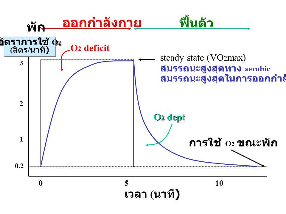 เวลา ( นาที ) 0510 อัตราการใช้ O 2 ( ลิตร / นาที ) อัตราการใช้ O 2 ( ลิตร / นาที ) 0.2 1 2 3 ออกกำลังกาย ฟื้นตัว O 2 deficit steady state (VO 2 max) O