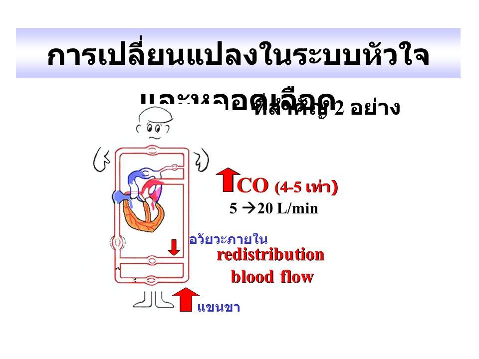 การเปลี่ยนแปลงในระบบหัวใจ และหลอดเลือด redistribution blood flow redistribution blood flow ที่สำคัญ 2 อย่าง 5  20 L/min CO (4-5 เท่า ) อวัยวะภายใน แข