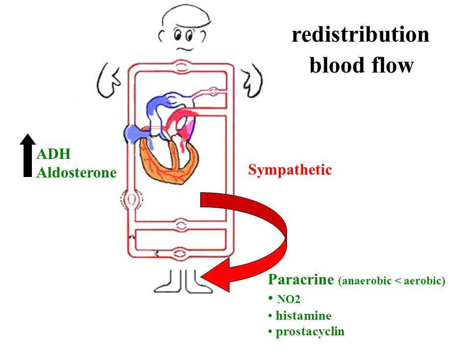 redistribution blood flow Sympathetic Paracrine (anaerobic < aerobic) NO2 histamine prostacyclin ADH Aldosterone