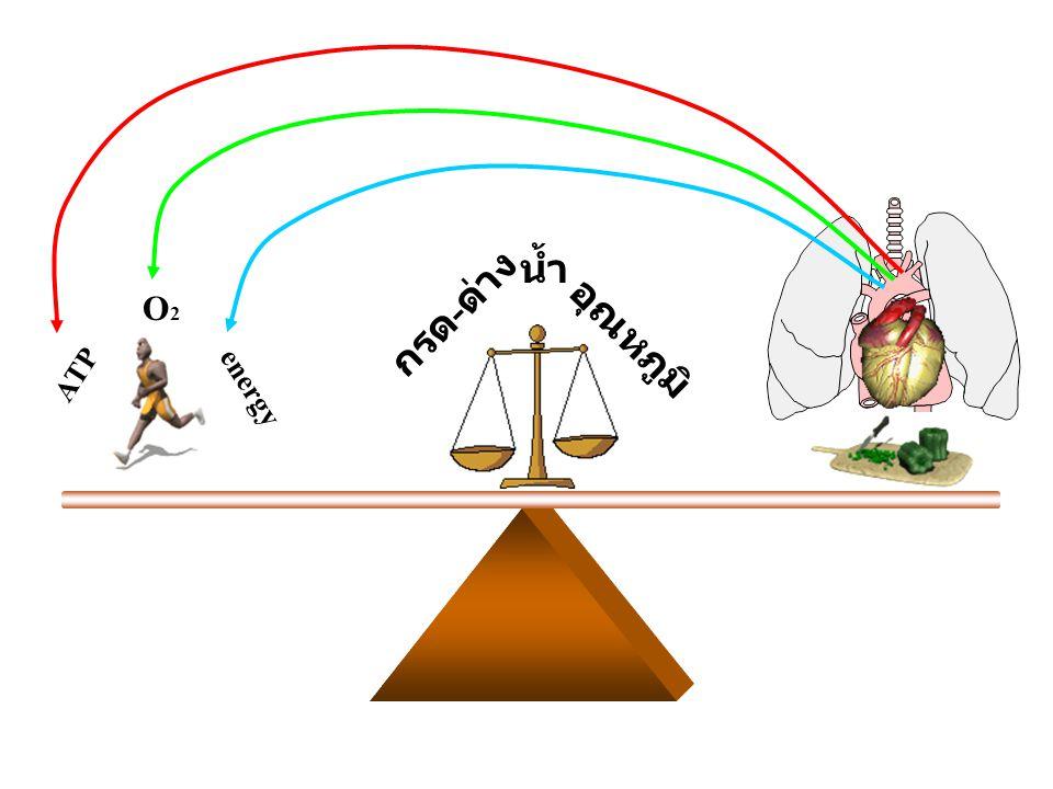 ATP O2O2 energy อุณหภูมิ กรด - ด่าง น้ำ