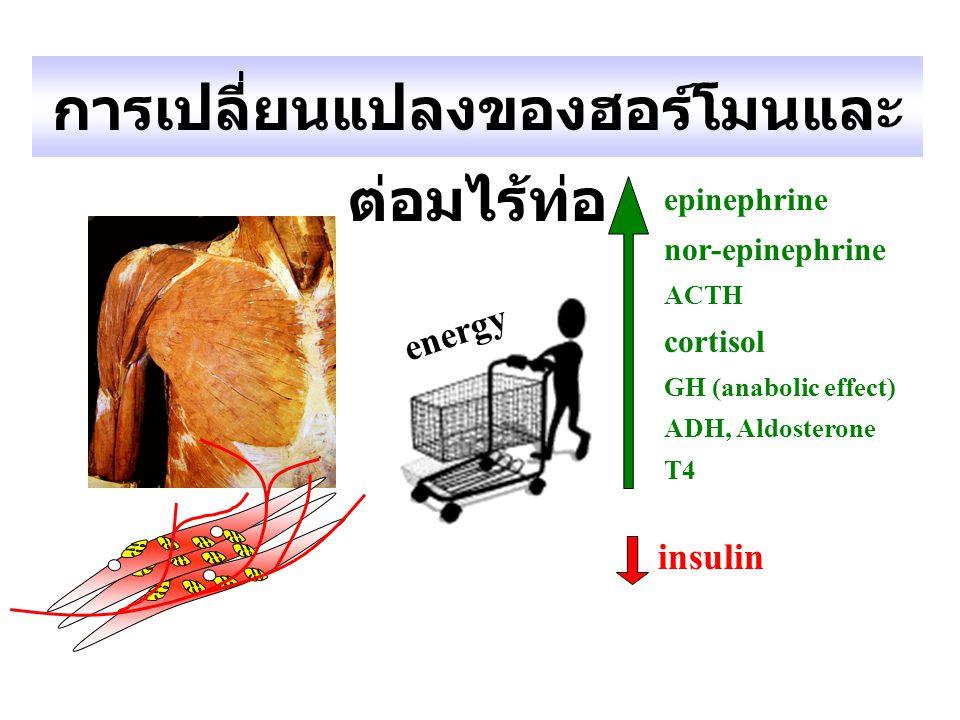 การเปลี่ยนแปลงของฮอร์โมนและ ต่อมไร้ท่อ epinephrine nor-epinephrine ACTH cortisol GH (anabolic effect) ADH, Aldosterone T4 insulin energy