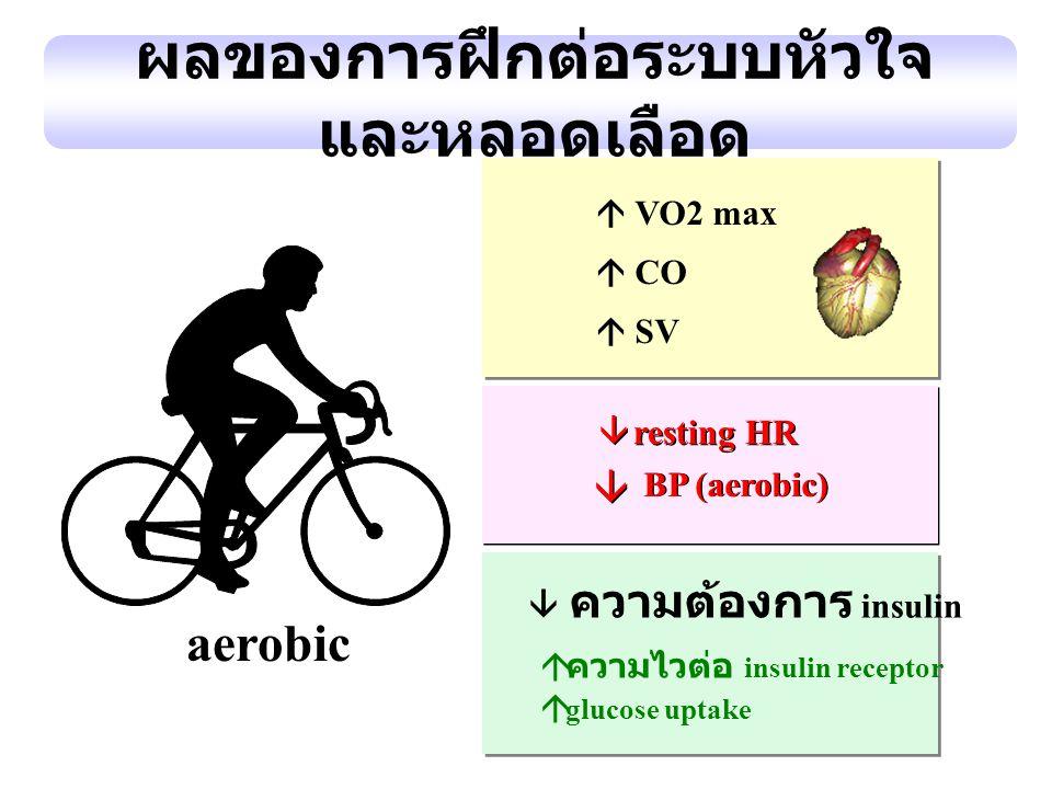 aerobic ผลของการฝึกต่อระบบหัวใจ และหลอดเลือด  resting HR  ความไวต่อ insulin receptor  glucose uptake  VO2 max  CO  SV BP (aerobic)    ความต้อ