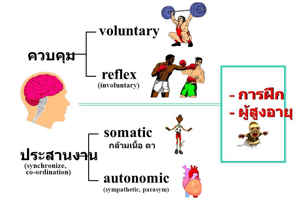 ควบคุม ประสานงาน (synchronize, co-ordination) voluntary reflex (involuntary) somatic กล้ามเนื้อ ตา หู autonomic (sympathetic, parasym) - การฝึก - ผู้ส
