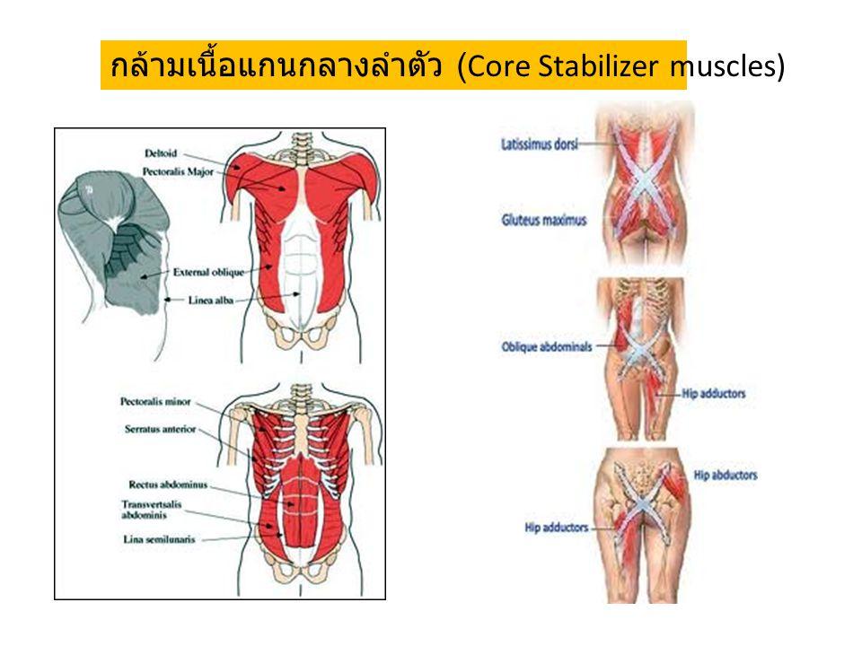 กล้ามเนื้อแกนกลางลำตัว (Core Stabilizer muscles)
