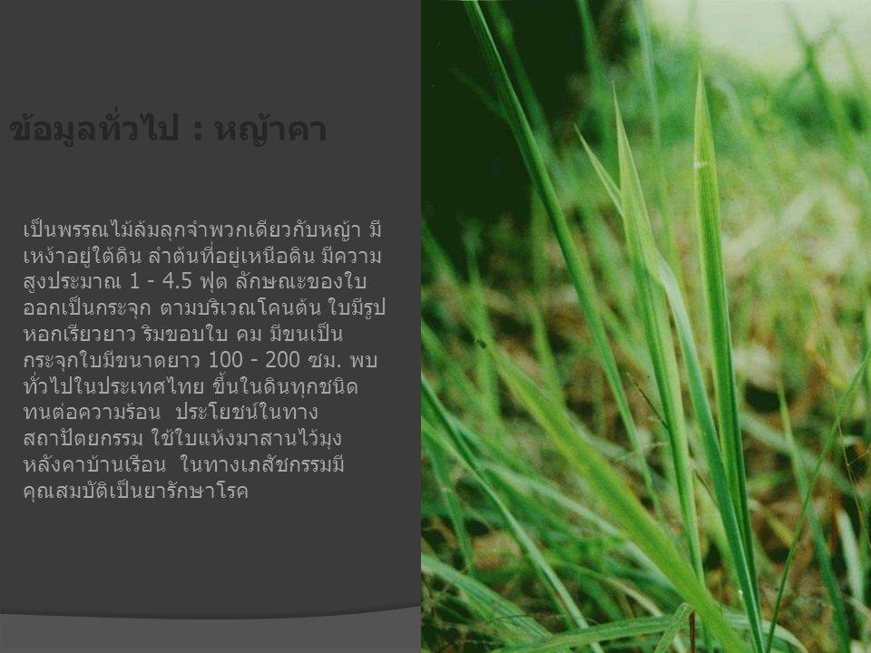 ข้อมูลทั่วไป : หญ้าคา เป็นพรรณไม้ล้มลุกจำพวกเดียวกับหญ้า มี เหง้าอยู่ใต้ดิน ลำต้นที่อยู่เหนือดิน มีความ สูงประมาณ 1 - 4.5 ฟุต ลักษณะของใบ ออกเป็นกระจุ