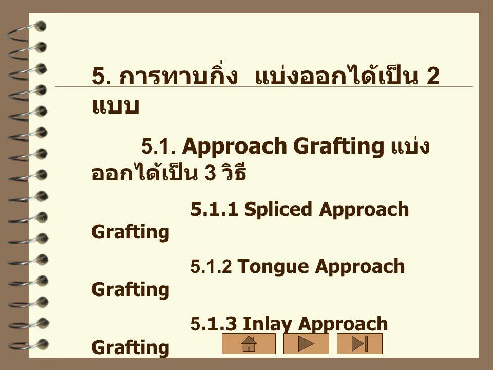 5. การทาบกิ่ง แบ่งออกได้เป็น 2 แบบ 5. 1. Approach Grafting แบ่ง ออกได้เป็น 3 วิธี 5.1.1 Spliced Approach Grafting 5.1.2 Tongue Approach Grafting 5.1.3