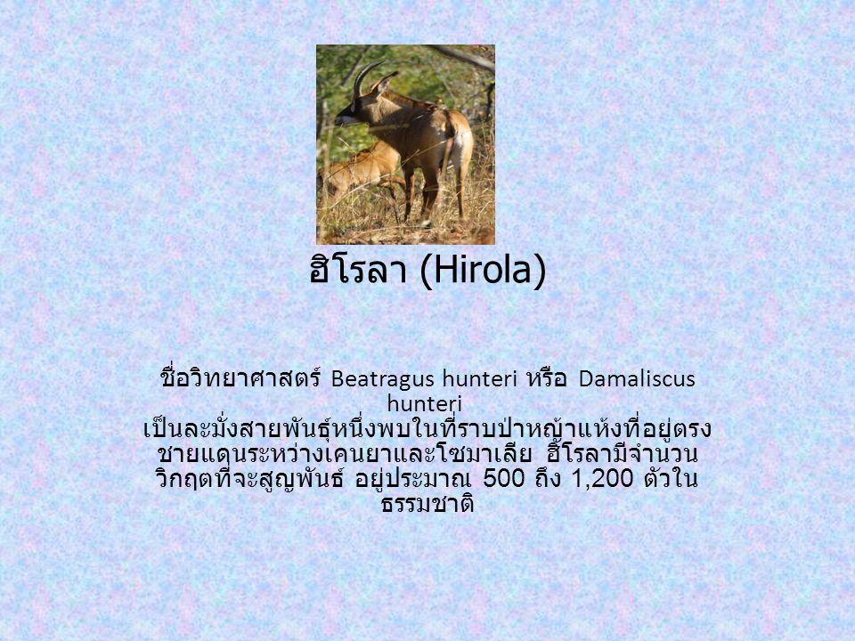 ฮิโรลา (Hirola) ชื่อวิทยาศาสตร์ Beatragus hunteri หรือ Damaliscus hunteri เป็นละมั่งสายพันธุ์หนึ่งพบในที่ราบป่าหญ้าแห้งที่อยู่ตรง ชายแดนระหว่างเคนยาและโซมาเลีย ฮิโรลามีจำนวน วิกฤตที่จะสูญพันธ์ อยู่ประมาณ 500 ถึง 1,200 ตัวใน ธรรมชาติ