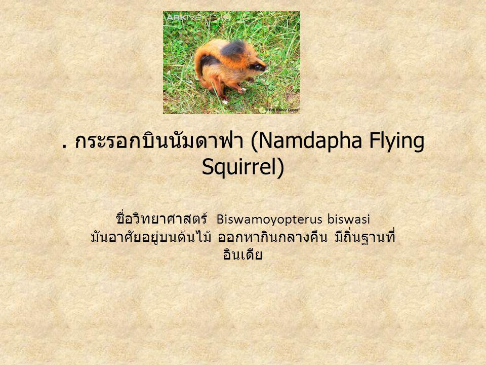 . กระรอกบินนัมดาฟา (Namdapha Flying Squirrel) ชื่อวิทยาศาสตร์ Biswamoyopterus biswasi มันอาศัยอยู่บนต้นไม้ ออกหากินกลางคืน มีถิ่นฐานที่ อินเดีย