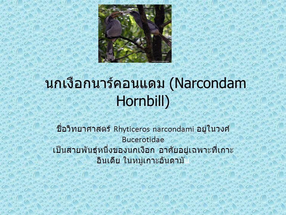 นกเงือกนาร์คอนแดม (Narcondam Hornbill) ชื่อวิทยาศาสตร์ Rhyticeros narcondami อยู่ในวงศ์ Bucerotidae เป็นสายพันธุ์หนึ่งของนกเงือก อาศัยอยู่เฉพาะที่เกาะ อินเดีย ในหมู่เกาะอันดามัน