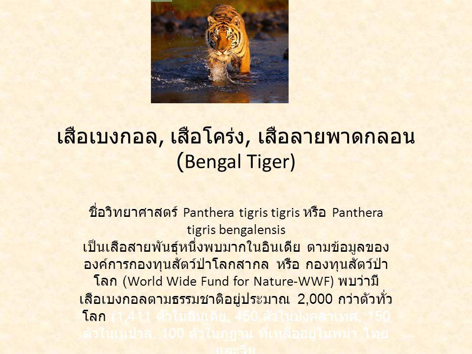 เสือเบงกอล, เสือโคร่ง, เสือลายพาดกลอน (Bengal Tiger) ชื่อวิทยาศาสตร์ Panthera tigris tigris หรือ Panthera tigris bengalensis เป็นเสือสายพันธุ์หนึ่งพบมากในอินเดีย ตามข้อมูลของ องค์การกองทุนสัตว์ป่าโลกสากล หรือ กองทุนสัตว์ป่า โลก (World Wide Fund for Nature-WWF) พบว่ามี เสือเบงกอลตามธรรมชาติอยู่ประมาณ 2,000 กว่าตัวทั่ว โลก (1,411 ตัวในอินเดีย, 450 ตัวในบังคลาเทศ, 150 ตัวในเนปาล, 100 ตัวในภูฏาน ที่เหลืออยู่ในพม่า ไทย และจีน