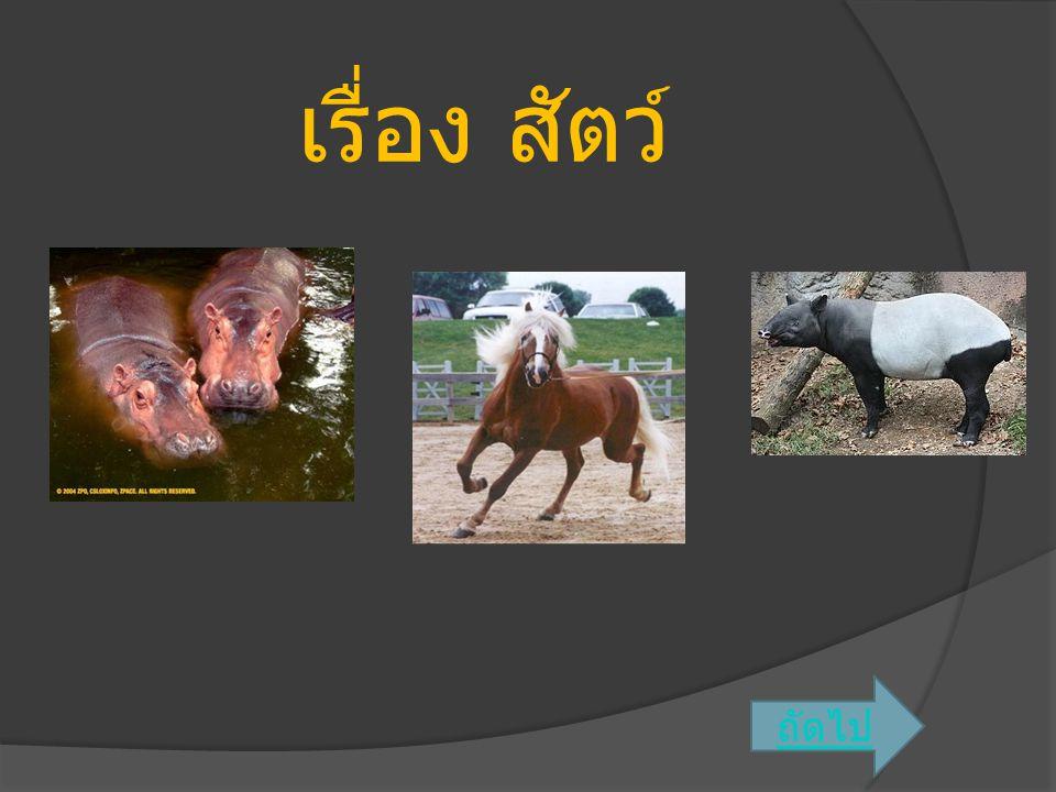 สุนัข  สุนัข เป็นสัตว์เลี้ยงลูกด้วยน้ำนมหลายชนิด หลายสกุลในวงศ์ Canidae ออกลูกเป็นตัว ลำตัวมีขนปกคลุม มีเขี้ยว 2 คู่ เท้าหน้ามี 5 นิ้ว เท้าหลังมี 4 นิ้ว ซ่อนเล็บไม่ได้ อวัยวะ เพศของสุนัขตัวผู้มีกระดูกอยู่ภายใน 1 ชิ้น สุนัขที่ยังคงเป็นสัตว์ป่า เช่น หมาใน (Cuon alpinus) สุนัขที่เลี้ยงเป็นสัตว์บ้าน คือ ชนิด Canis lupus familiaris สุนัขเป็นสัตว์ที่มี หลายพันธุ์ เช่น ลาบราดอร์, โกลเด้น, ชิวา วา และอีกมากมาย มีทั้งขนาดเล็กและใหญ่ ดุและไม่ดุ พันธุ์ที่มีขนาดใหญ่ เช่น โกลเด้น ลาบราดอร์ ที่มีขนาดเล็ก เช่น ชิวาวา ชิสุสัตว์เลี้ยงลูกด้วยน้ำนม อวัยวะ เพศ หมาใน ถัดไป ย้อนก ลับ