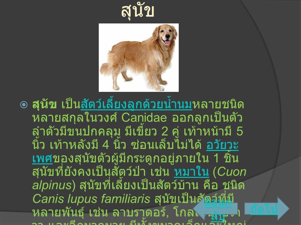 สุนัข  สุนัข เป็นสัตว์เลี้ยงลูกด้วยน้ำนมหลายชนิด หลายสกุลในวงศ์ Canidae ออกลูกเป็นตัว ลำตัวมีขนปกคลุม มีเขี้ยว 2 คู่ เท้าหน้ามี 5 นิ้ว เท้าหลังมี 4 น