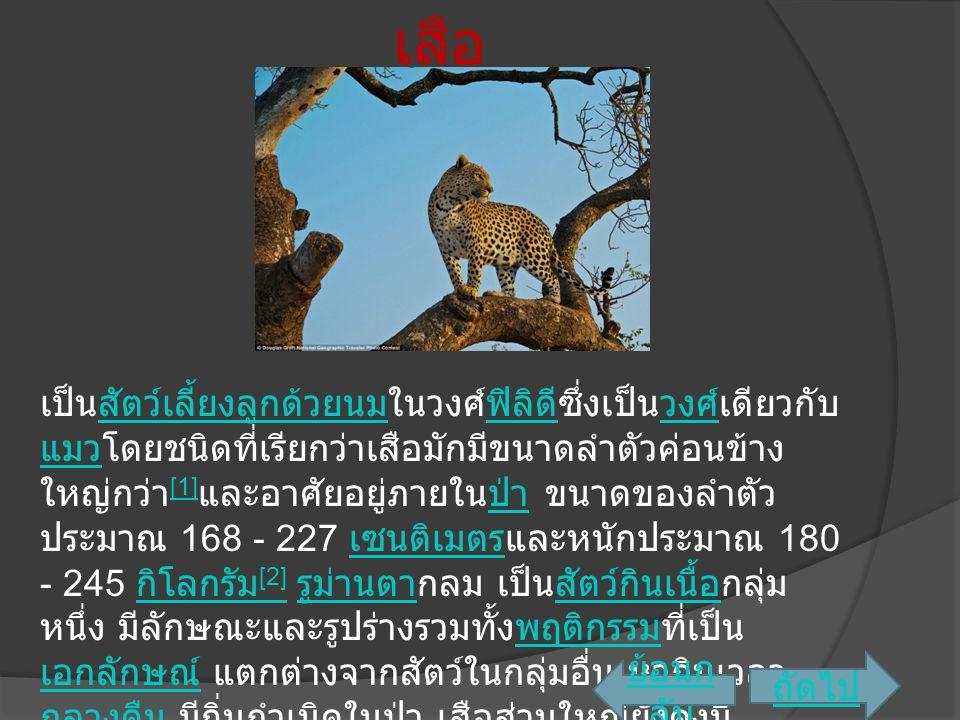 เสือ เป็นสัตว์เลี้ยงลูกด้วยนมในวงศ์ฟิลิดีซึ่งเป็นวงศ์เดียวกับ แมวโดยชนิดที่เรียกว่าเสือมักมีขนาดลำตัวค่อนข้าง ใหญ่กว่า [1] และอาศัยอยู่ภายในป่า ขนาดขอ