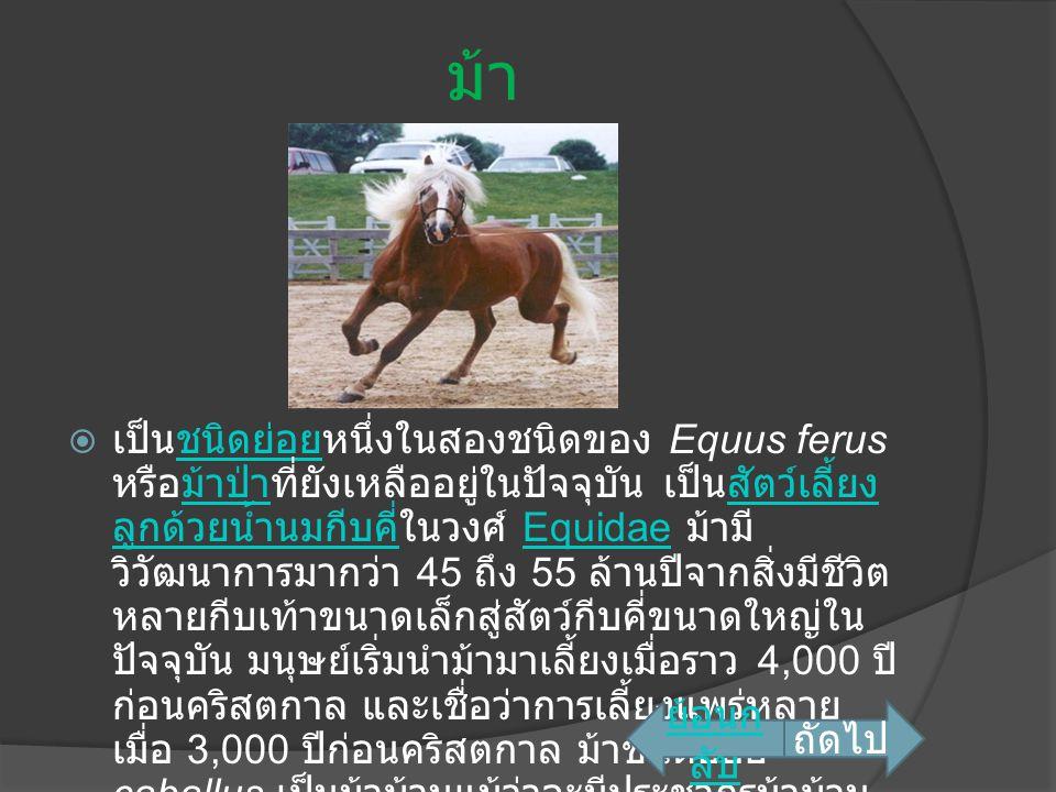 ม้า  เป็นชนิดย่อยหนึ่งในสองชนิดของ Equus ferus หรือม้าป่าที่ยังเหลืออยู่ในปัจจุบัน เป็นสัตว์เลี้ยง ลูกด้วยน้ำนมกีบคี่ในวงศ์ Equidae ม้ามี วิวัฒนาการม