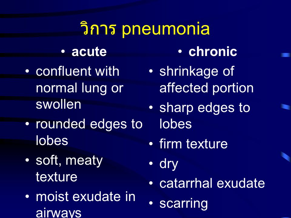 วิการ pneumonia acute confluent with normal lung or swollen rounded edges to lobes soft, meaty texture moist exudate in airways swollen lobules edema chronic shrinkage of affected portion sharp edges to lobes firm texture dry catarrhal exudate scarring
