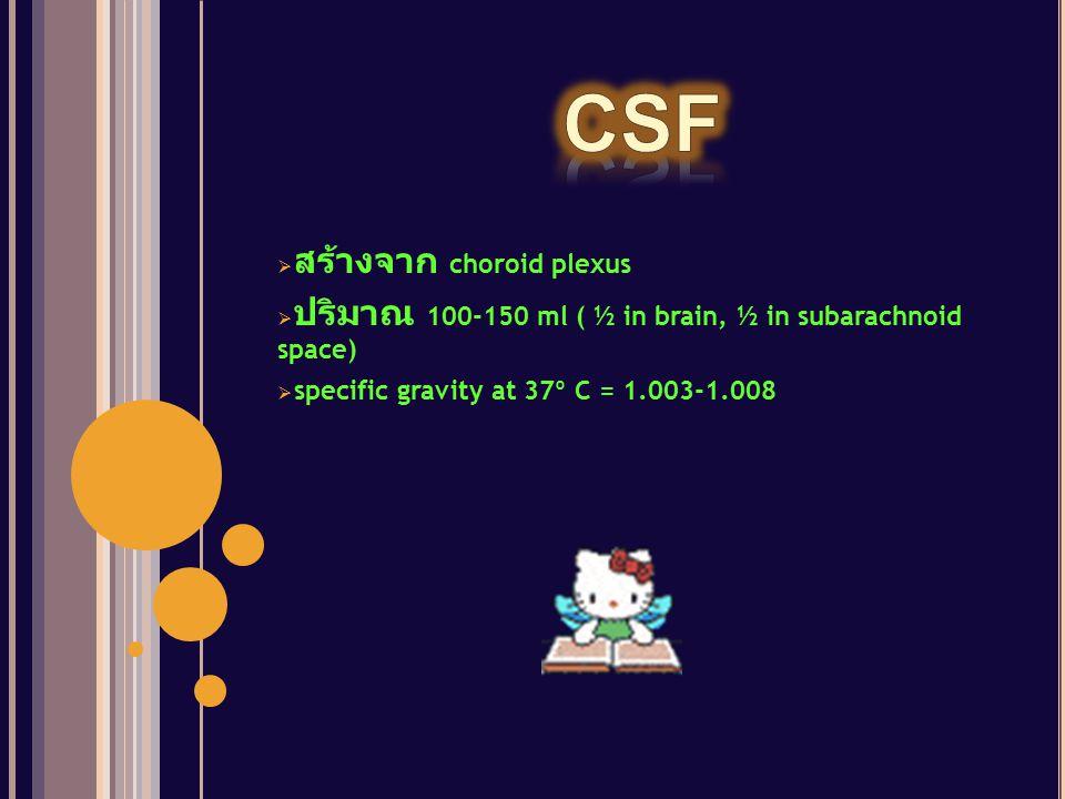  สร้างจาก choroid plexus  ปริมาณ 100-150 ml ( ½ in brain, ½ in subarachnoid space)  specific gravity at 37º C = 1.003-1.008