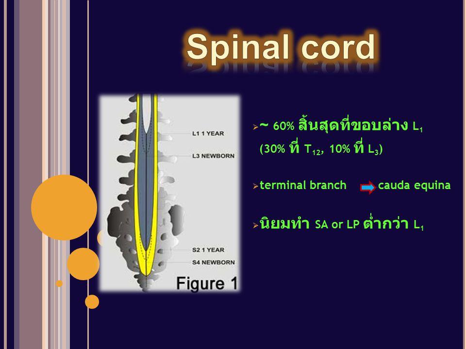  ~ 60% สิ้นสุดที่ขอบล่าง L 1 (30% ที่ T 12, 10% ที่ L 3 )  terminal branch cauda equina  นิยมทำ SA or LP ต่ำกว่า L 1