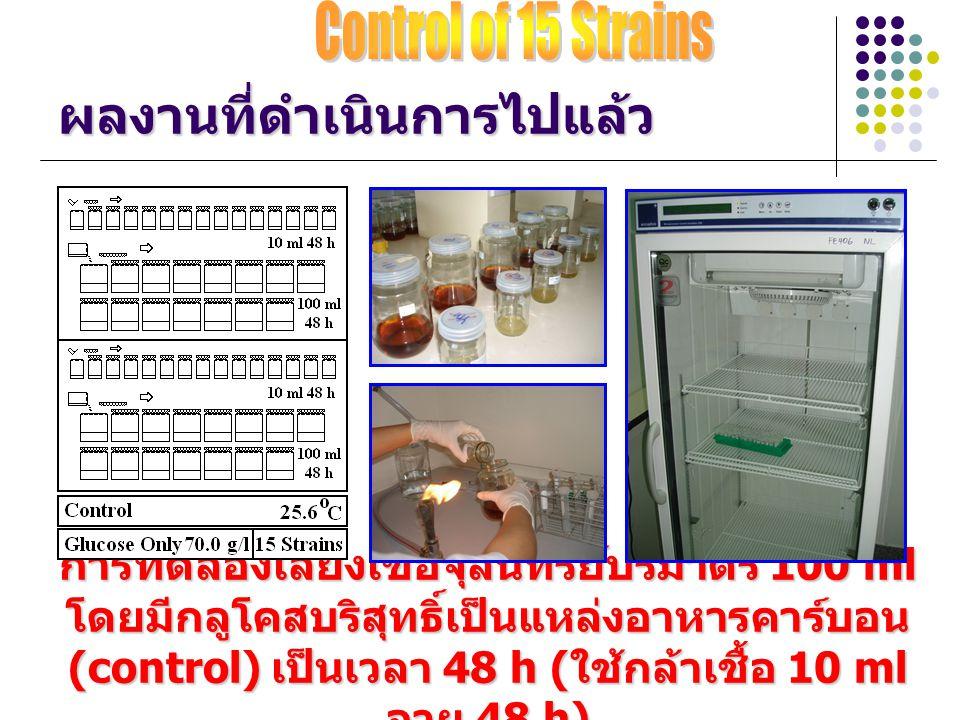 ผลงานที่ดำเนินการไปแล้ว การทดลองเลี้ยงเชื้อจุลินทรีย์ปริมาตร 100 ml โดยมีกลูโคสบริสุทธิ์เป็นแหล่งอาหารคาร์บอน (control) เป็นเวลา 48 h ( ใช้กล้าเชื้อ 1