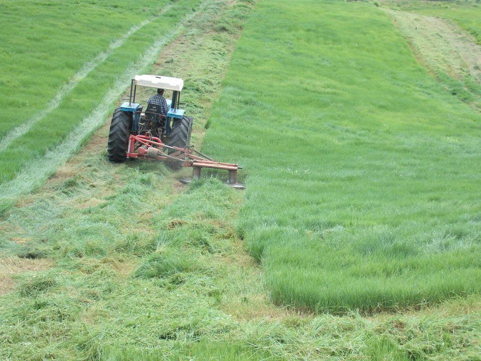  เกษตรกรรายย่อย  ไม่ควรตัดเกิน 1 ไร่  เครื่องตัดแบบสะพาย ไหล่หรือเครื่องตัดชนิด เดินตาม อุปกรณ์เครื่องมือ เครื่องจักร ( ต่อ )