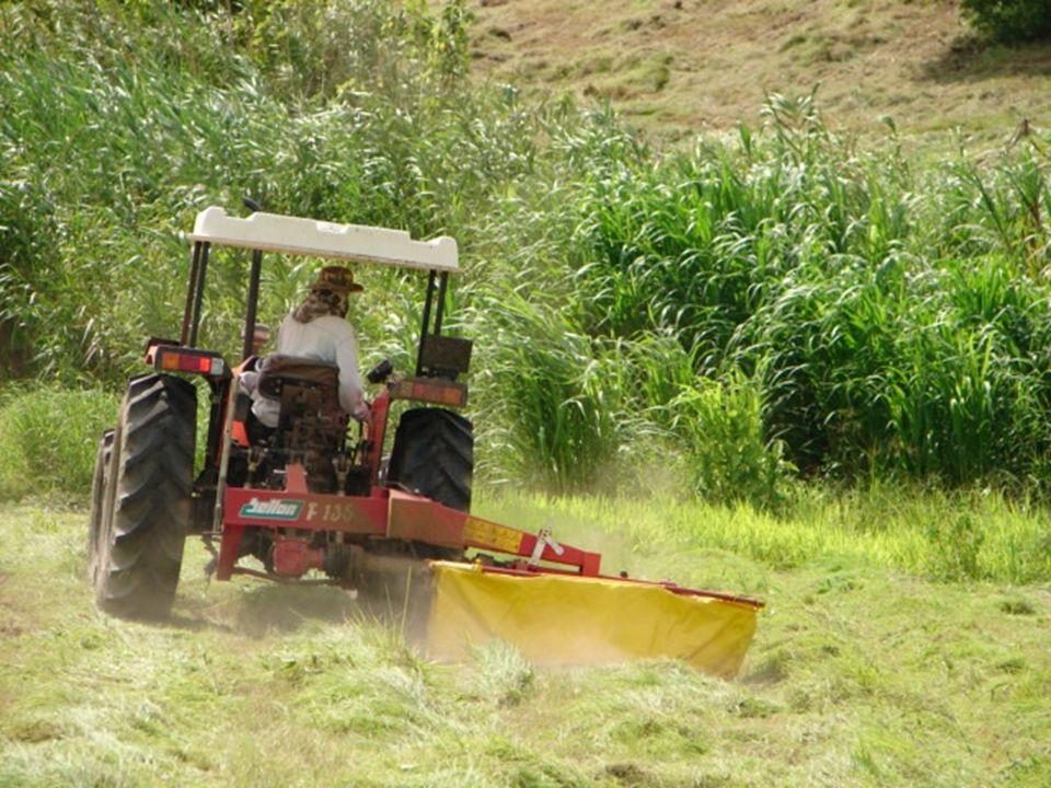   เครื่องกระจายหญ้า แบบสะบัดผึ่ง ให้หญ้า โดนแดด และลมอย่าง ทั่วถึง ประมาณ 5-7 รอบ เป็นหัวใจสำคัญ ของการทำหญ้าแห้ง แดดเดียว อุปกรณ์เครื่องมือ เครื่องจักร ( ต่อ )