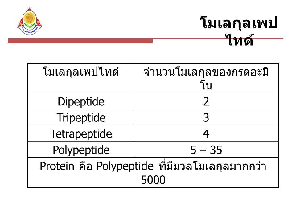 โมเลกุลเพป ไทด์ จำนวนโมเลกุลของกรดอะมิ โน Dipeptide2 Tripeptide3 Tetrapeptide4 Polypeptide5 – 35 Protein คือ Polypeptide ที่มีมวลโมเลกุลมากกว่า 5000