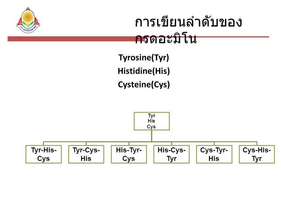 การเขียนลำดับของ กรดอะมิโน Tyrosine(Tyr) Histidine(His) Cysteine(Cys) Tyr His Cys Tyr-His- Cys Tyr-Cys- His His-Tyr- Cys His-Cys- Tyr Cys-Tyr- His Cys-His- Tyr