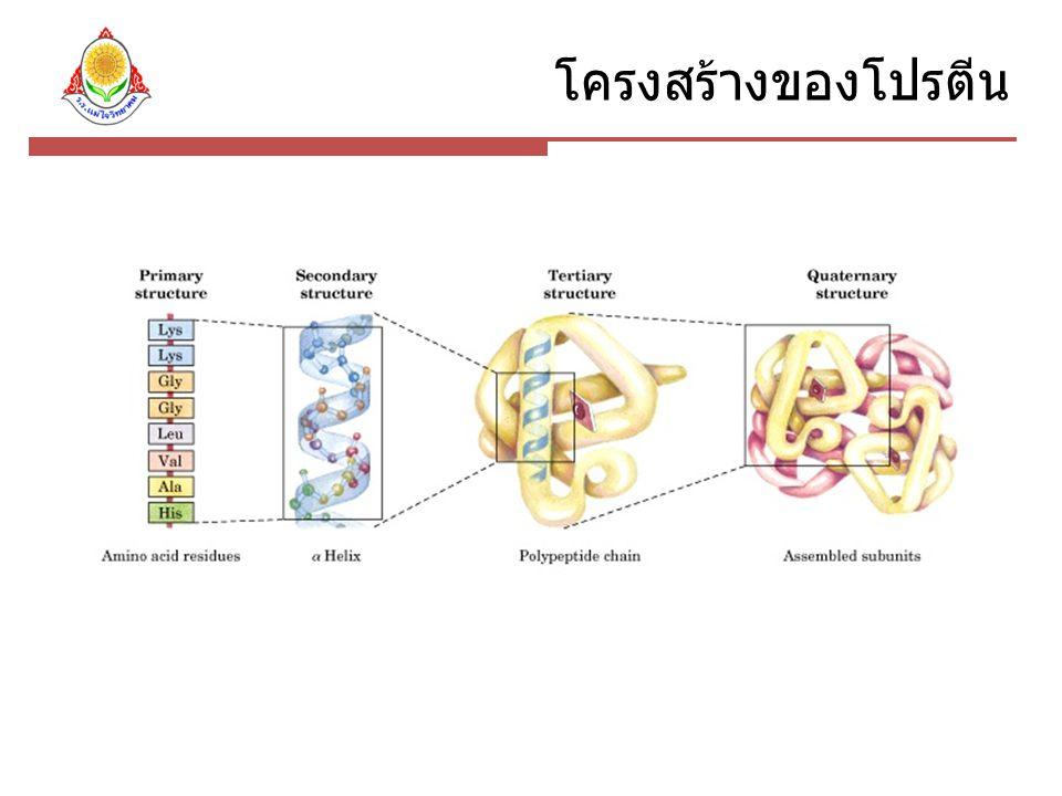 โครงสร้างของโปรตีน
