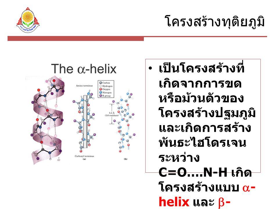 โครงสร้างทุติยภูมิ เป็นโครงสร้างที่ เกิดจากการขด หรือม้วนตัวของ โครงสร้างปฐมภูมิ และเกิดการสร้าง พันธะไฮโดรเจน ระหว่าง C=O….N-H เกิด โครงสร้างแบบ  - helix และ  - plated sheet