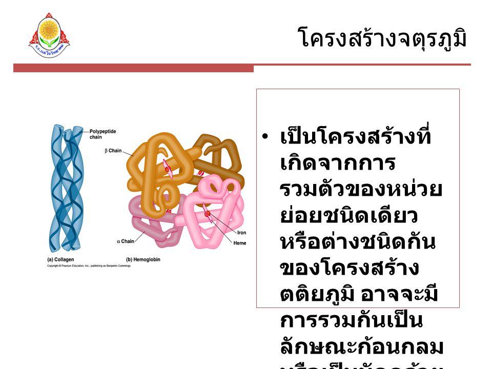 โครงสร้างจตุรภูมิ เป็นโครงสร้างที่ เกิดจากการ รวมตัวของหน่วย ย่อยชนิดเดียว หรือต่างชนิดกัน ของโครงสร้าง ตติยภูมิ อาจจะมี การรวมกันเป็น ลักษณะก้อนกลม หรือเป็นมัดคล้าย เส้นใย