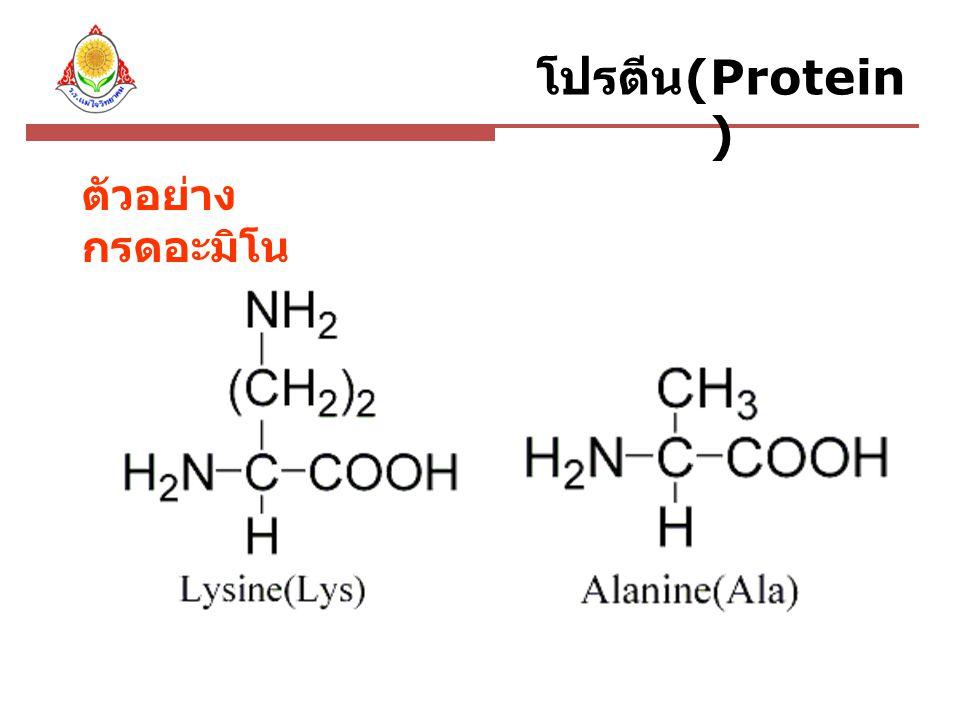 เอ็นไซม์ (Enzyme) เอ็นไซม์ เป็นโปรตีนที่ทำหน้าที่เป็น ตัวเร่งปฏิกิริยาในเซลล์สิ่งมีชีวิต