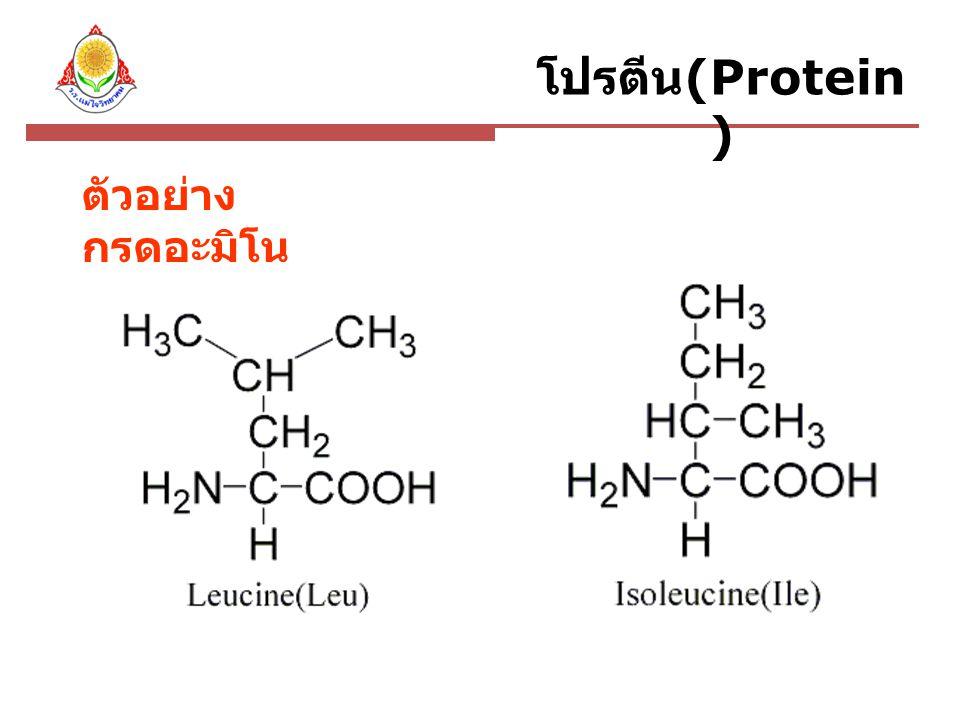 ปัจจัยที่มีผลต่อการ ทำงานของเอนไซม์ ชนิดของสารตั้งต้น ความเข้มข้นของสารตั้งต้น ความเข้มข้นของเอนไซม์ ความเป็นกรด - เบสของสารละลาย อุณหภูมิ สารยับยั้ง สารกระตุ้น