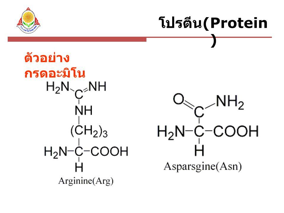 ประเภทของโปรตีน โปรตีนก้อนกลม เกิดจากสายพอลิเพป ไทด์รวมตัวม้วนพับ พันกันและอัดแน่นเป็น ก้อนกลม ละลายน้ำ ได้ดี ทำหน้าที่เกี่ยวกับ กระบวนการเมทาบอลิ ซึมต่างๆ ที่เกิดขึ้น ภายในเซลล์ โปรตีนเส้นใย เกิดจากสายพอลิ เพปไทด์พันกันใน ลักษณะเหมือนเส้น ใยยาวๆ ละลายน้ำได้น้อย ทำหน้าที่เป็นโปรตีน โครงสร้าง มีความ แข็งแรงและ ยืดหยุ่นสูง