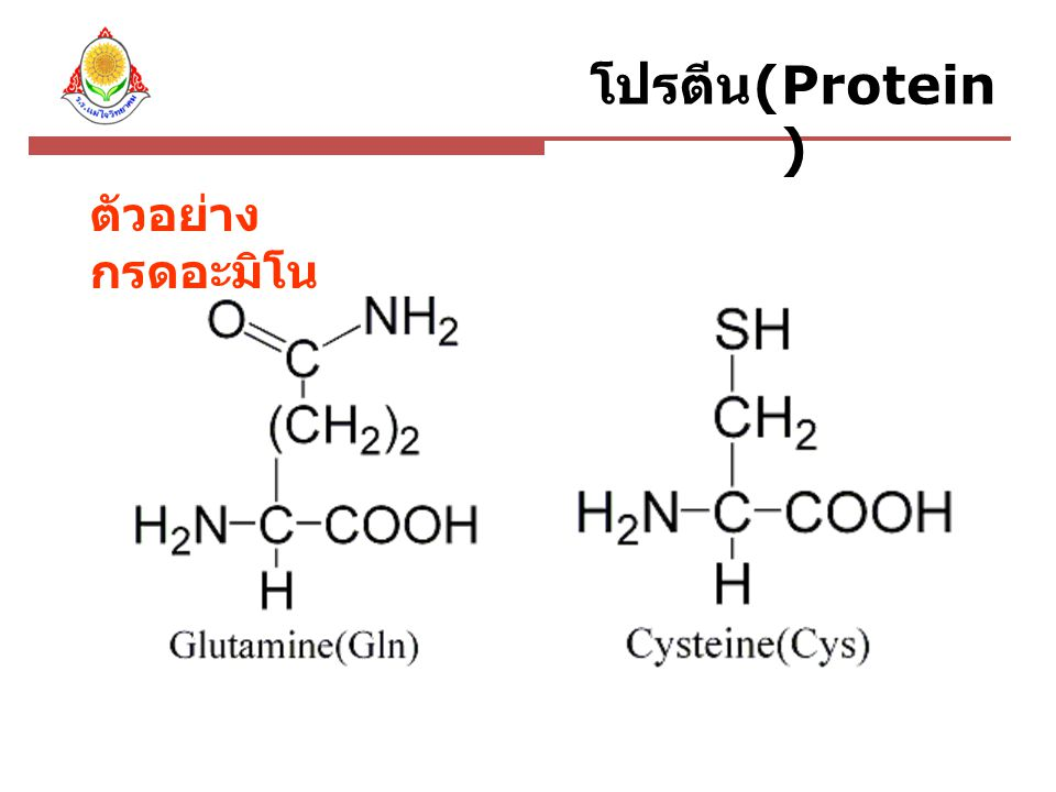 ตัวอย่าง กรดอะมิโน โปรตีน (Protein )